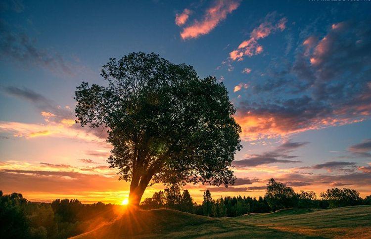 Tənha ərik ağacının kölgəsi – Hekayə