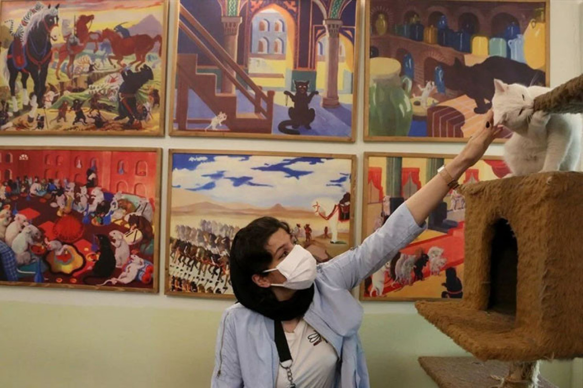 "İranda qeyri-adi məkan: ""Pişik muzeyi""  - Fotolar"